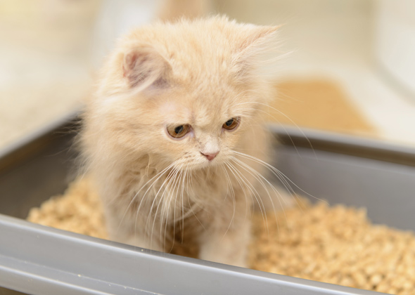 Allergic To Cat Litter Box