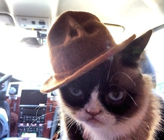 Grumpy Cat sports a mini Pharrell hat on the way to the MTV Movie Awards.