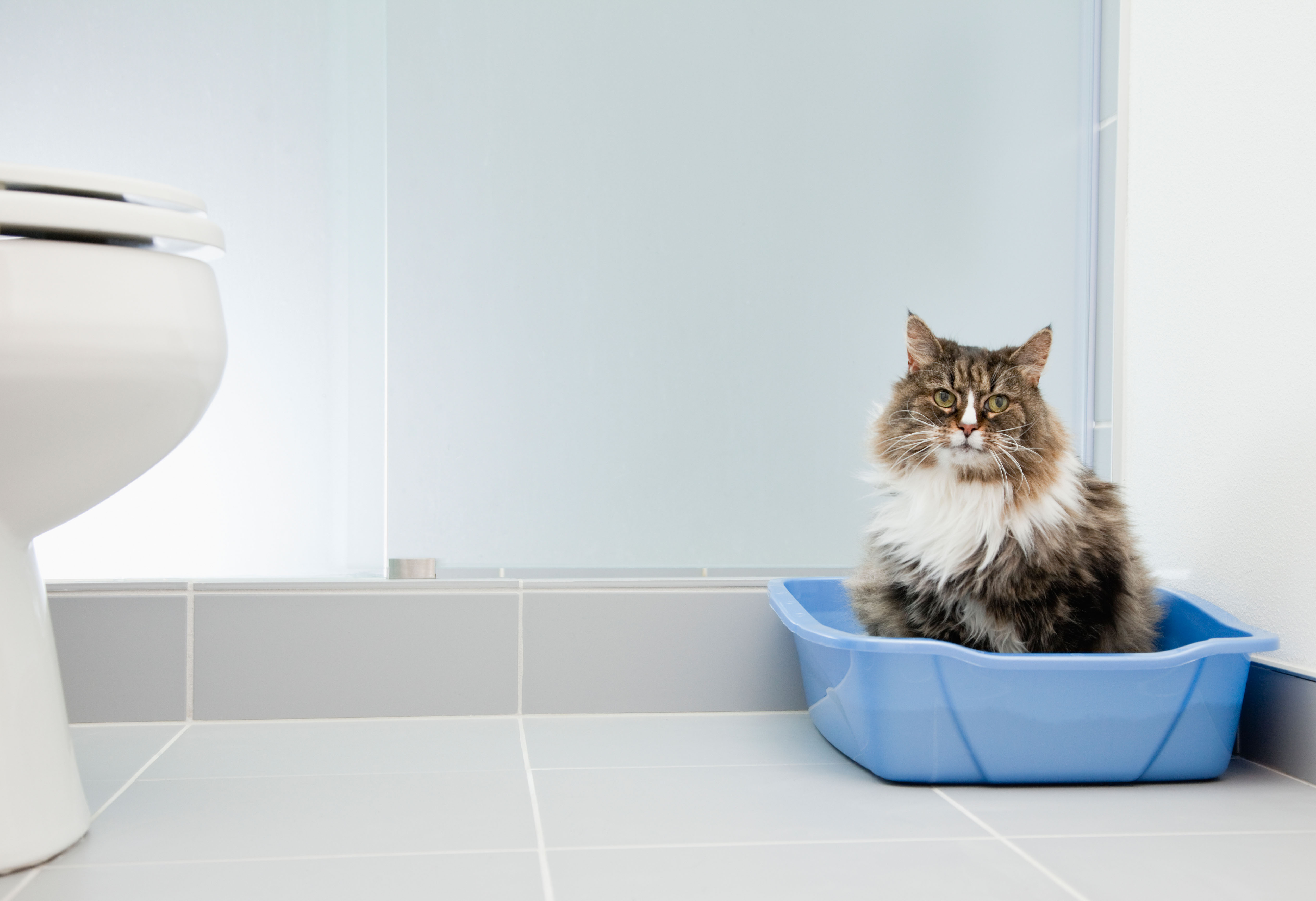 5 litter box mistakes you're probably making