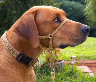 Comfort Trainer head collar