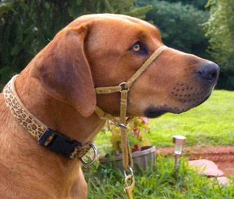 Kurgo Snout About Dog Head Halter Gentle Control while Walking Coastal Blue /& Raspberry Purple Reflective Trim No Pull Dog Training Collar Dog Training Tool 3 sizes Headcollar for Dogs