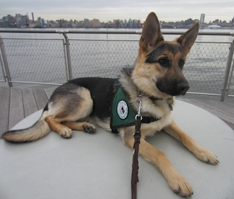 Janet Keeler says she has a soft spot for the German Shepherds she's raised, like Olivia, here in Hoboken, New Jersey.