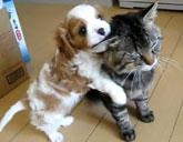 Puppy climbs on cat