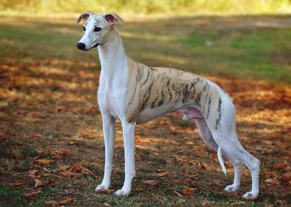 Ideal Dog Breeds For First Time Owners