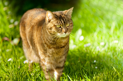 Summer Hazards And Your Cat