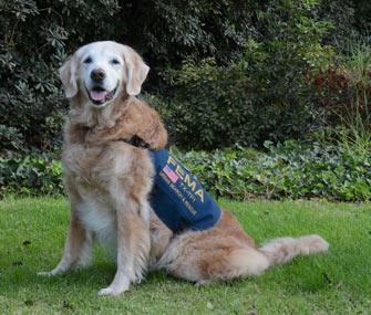 Bretagne 9/11 Search Dog