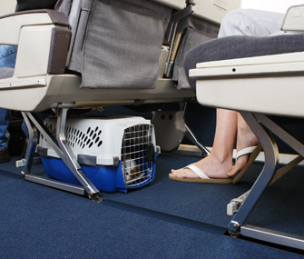 Dog in crate under airplane seat