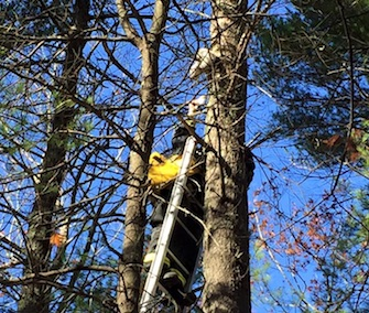 A firefighter named Tom comes to the rescue of a kitten named Jerry, who was stuck 35 feet up in a tree.
