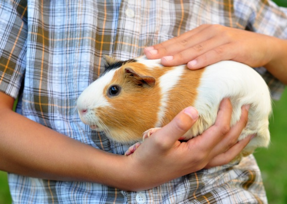 6 Exotic Pets To Consider If You Can T Have A Dog Or Cat
