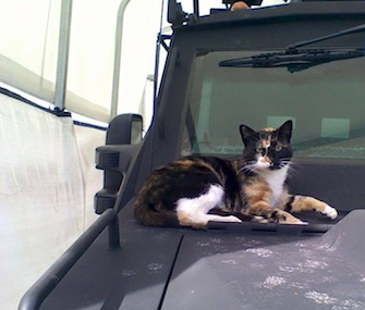 The Boston Police Department is asking the public to help find its unofficial mascot, SWAT Cat.