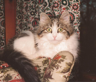 Dr. Ernie Ward's late cat, Pellie