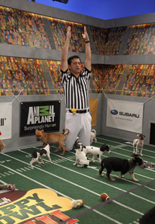 Ref and Puppy Bowl