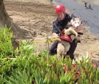 San Francisco firefighters came to the rescue of a dog who fell over a cliff.