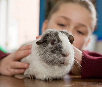 Girl petting a guinea pig