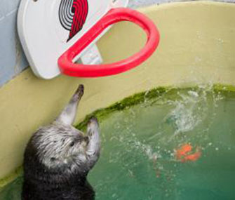 Eddie the sea otter shoots hoops to help his arthritis.