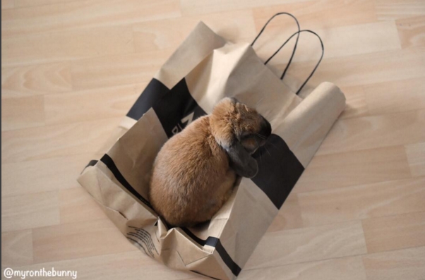 Bunny sitting on paper grocery bag