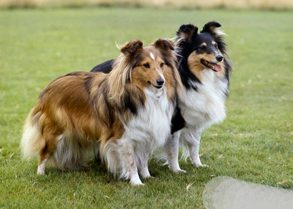 The World S Smartest Dog Breed