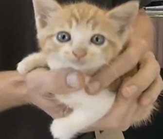 A tiny kitten was rescued from near a car's axle by a mechanic in Florida.