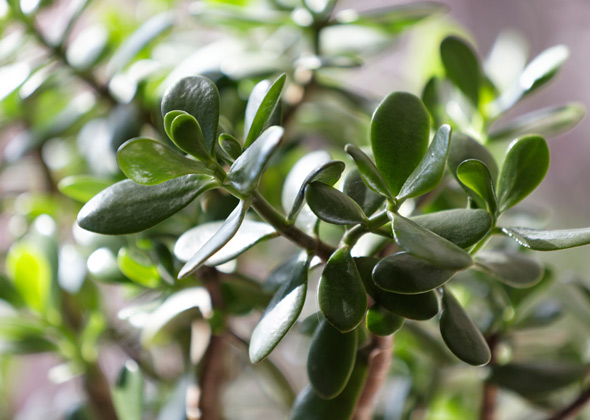 10 Household Plants That Are Dangerous To Dogs And Cats