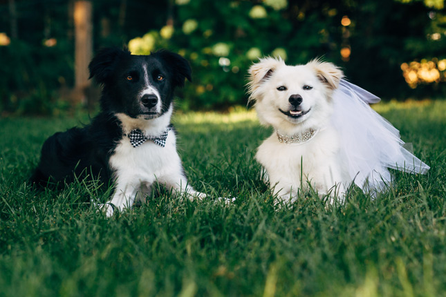 Teddy and Lucy at Dog Wedding