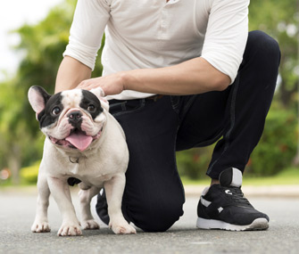 French Bulldog and owner in the park