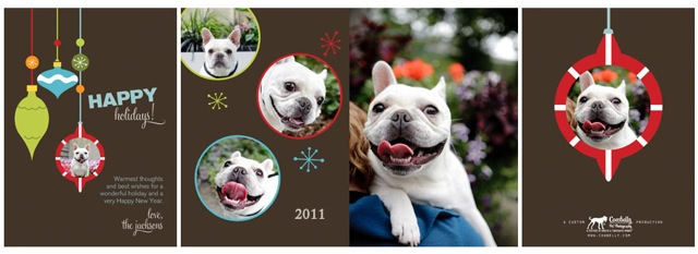 Holiday cards cowbelly pet photography
