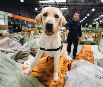 Among the species to be adopted through the WWF are dogs being trained to sniff out wildlife contraband.