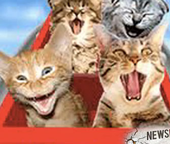 The International Cat Video Film Festival takes place Aug. 30.