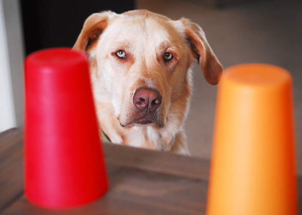6 Puppy Games To Play With Your New Puppy - DogTime