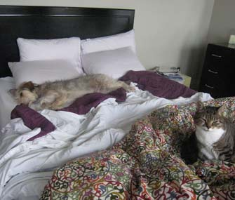 dog and cat on a bed