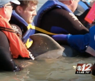 A team of rescuers helped free and mother dolphin who was caught in fishing gear in Florida.