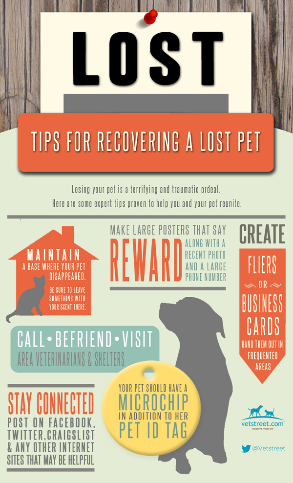 How To Find A Lost Cat Or Dog  Infographic