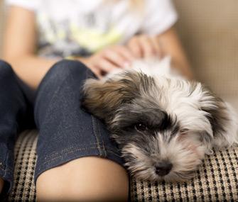 Kid petting dog