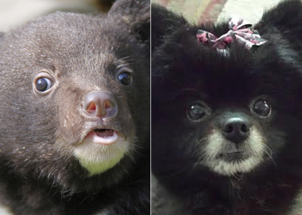 Dogs That Look Like Other Animals 12 Cats and Dogs Who L...