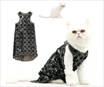 cat in sequin dress