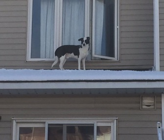 Firefighters came to the rescue of a curious dog who managed to get out onto the roof of this home.