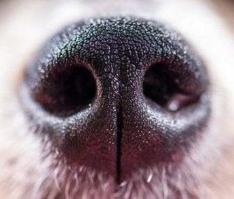Dog nose closeup