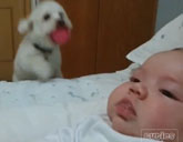 Jumping dog with baby