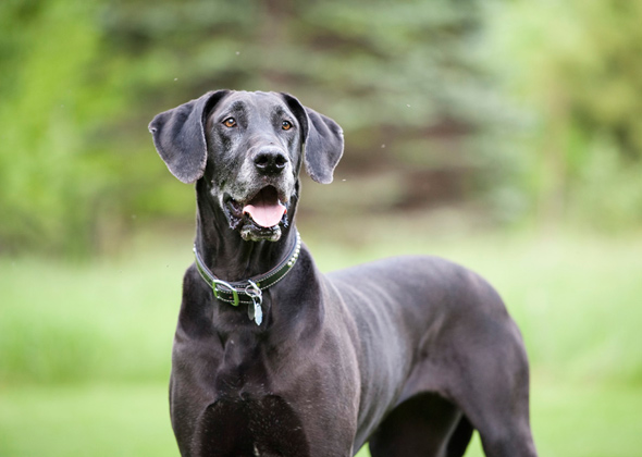 Best Girl Dog Names For Big Dogs