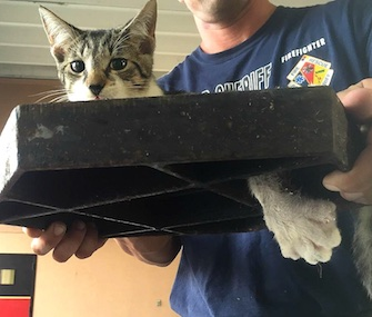 Firefighters in Florida came to the rescue of Captain, a tiny kitten who got his paw stuck in a sewer cover.