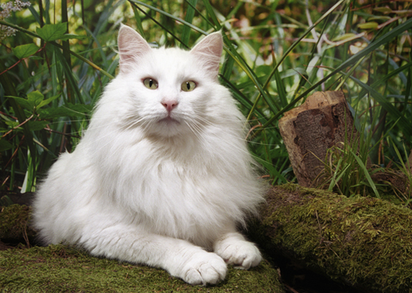 The Best Cat Breeds For Families