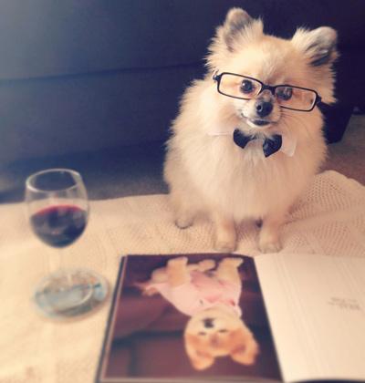 Classy gentleman Pomeranian