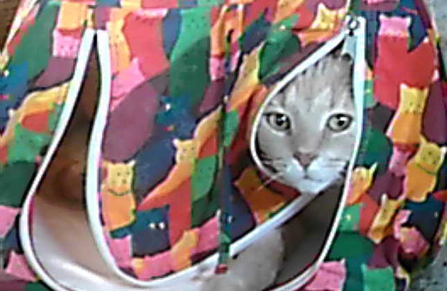 Hide and Seek Cat in Tent
