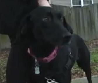 Roxanne helped lead her owner to a missing elderly woman in her Virginia neighborhood.