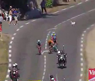 A small dog barely managed to run out of the way of cyclists on the Tour de France course.