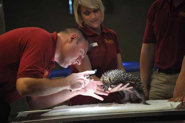 akidna veterinary exam