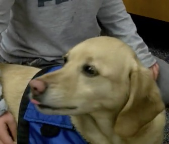 A therapy dog named Victor is helping kids at an Indiana elementary school.
