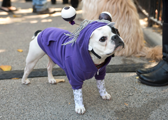 eb50b3a160f Boo The Dog Costume   Seriously How Did They Do This One. Amazing ...