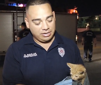 A little orange tabby kitten was saved from a drain by Miami firefighters.