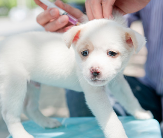 Why Do Puppies Need A Rabies Booster Shot